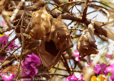 fruit bats-2