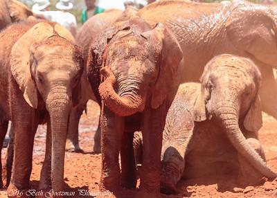 elephant playtime-4