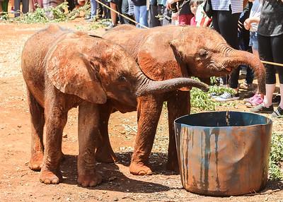 elephant drink