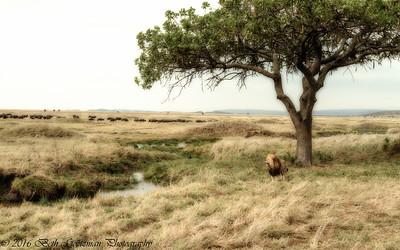 A Lions Kingdom2 - Serengeti NP - Tanzania