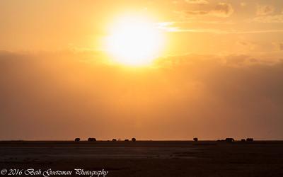 Amboseli Sunset - Amboseli NP - Kenya