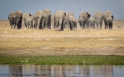 elephant exodus - Masai Mara-2