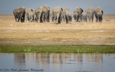 elephant exodus - Masai Mara