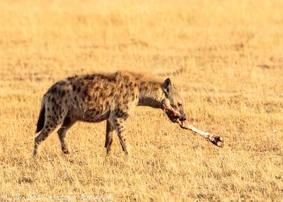 hyena-2