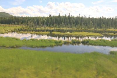 20160709-065 - Alaska Railroad-Trumpeter Swans