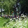 Vyatskoye wild flowers.