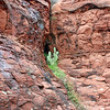 Cactus in the rock crevices.