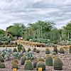 Entrance to the Desert Botanical Garden. (Phoenix)