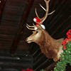 Christmas deer gracing the lobby of the El Tovar. On our drive to the canyon we saw a group of 6 deer by the side of the road.
