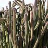 Worm-like cactus plant.