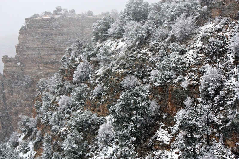 Snow covered trees in the fog during a snowstorm at the Desert View Watchtower.  (Grand Canyon)