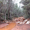 This is the forest primeval. (Sedona)