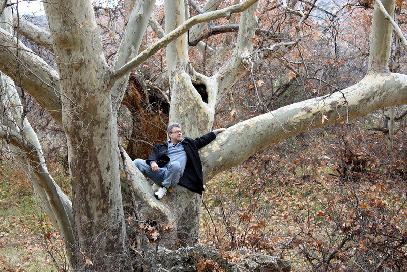 Rustem in a huge sycamore tree.