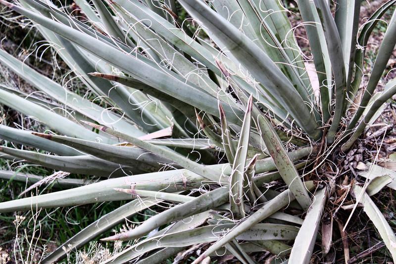 Desert vegetation.