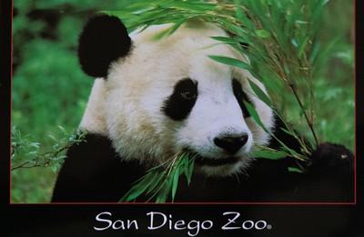 San Diego 2002