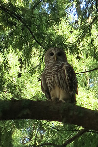Owl we spotted along the Riverwalk in San Antonio, TX