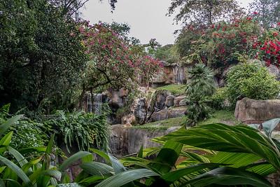 Busch Gardens, Tampa FL, 2015 Busch Gardens, Florida, 2015 Royal Lipizzaner Stallions, Flying horses, Florida