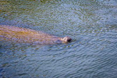Manatee Viewing Center, Apollo Beach FL  2015