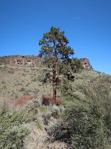Cowiche Canyon, Cle Elum, WA