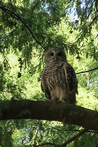 Owl we spotted along the Riverwalk in San Antonio, TX