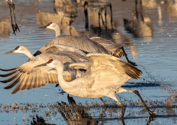 Ahead by a beak