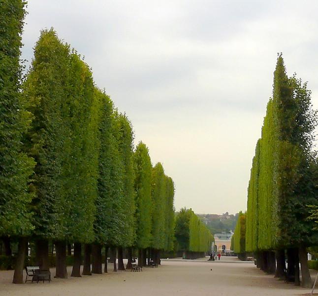 8-29-07 Schonbrunn Palace - Flat Pruned Trees