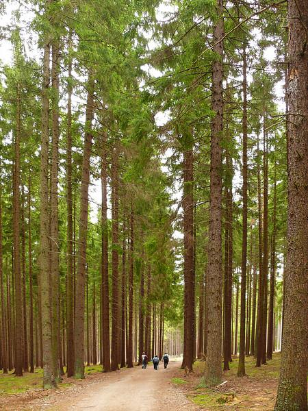9-3-2007 Hiking to Nasty Hunter - Tall Trees