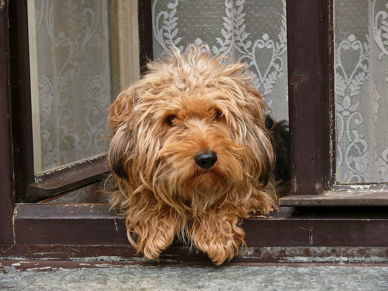 9-3-2007 Slavonice - Doggie in the Window