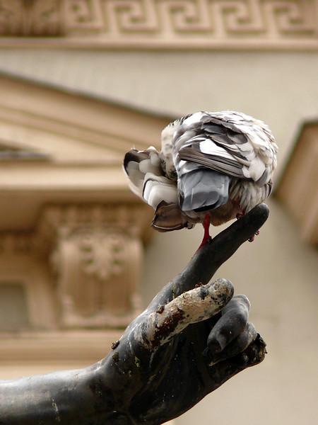 8-30-2007 Vienna - Pigeon on Pointer