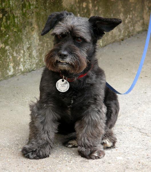 8-31-2007 Into Moravia - Cute Doggy
