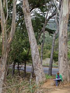 Under the Eucalyptus trees.