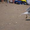 Seagulls... everywhere...