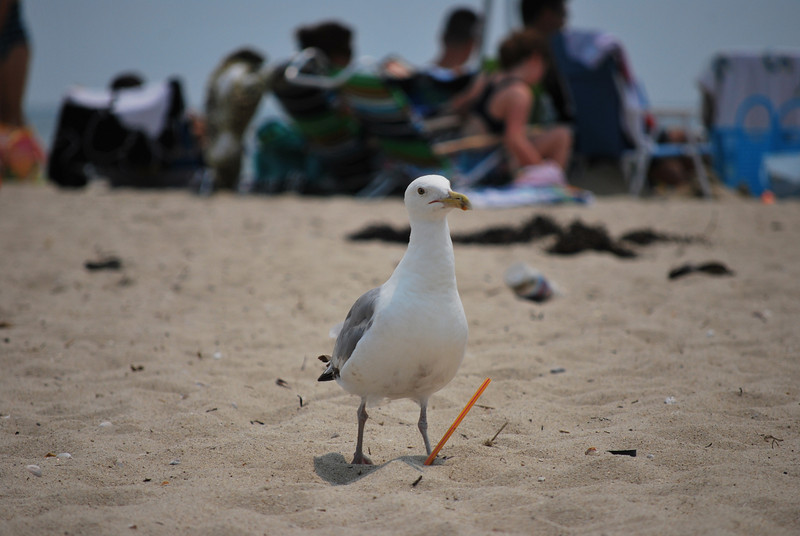 The seagulls were out in force in Chatham.