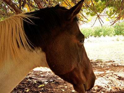 Horse in the shade