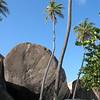 Mile high palms on Virgin Gorda.