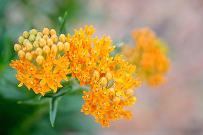 Orange Bursts