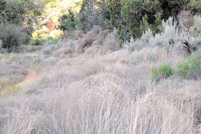 Tumbleweed Hive