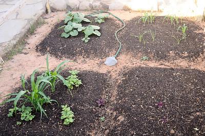 Garden growing native plants