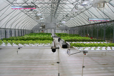 There is a greenhouse heated by the geothermal power which grows lettuce and tomatoes
