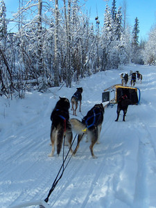 Debby and Elaine did Sled Dog mushing school and got to go out on first a 2 mile and then a 5 mile ride driving our own sled! We had a small sled and a team of 4 dogs pulling it. We followed the owner, Peg, around who was in the first sled.