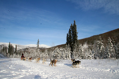 Driving a dog sled can be like driving a freight train...it can be very long!