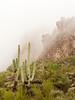 Peralta Canyon Fog