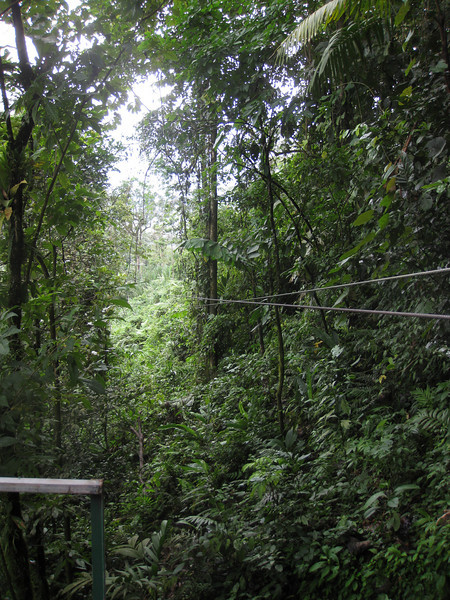Zip line goes through dense forest.