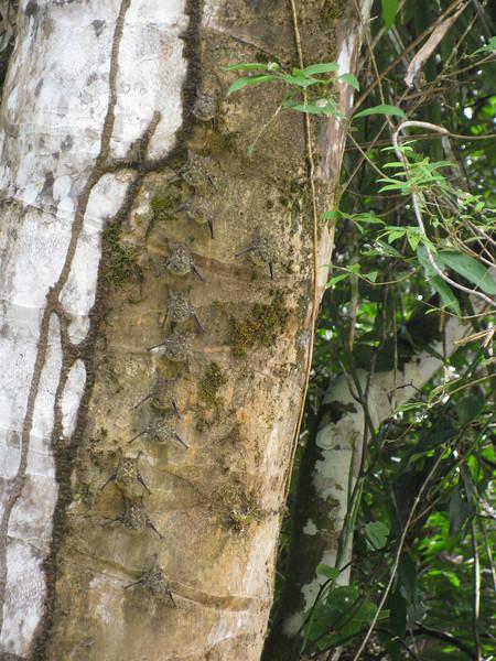 Bat birds hanging to the tree