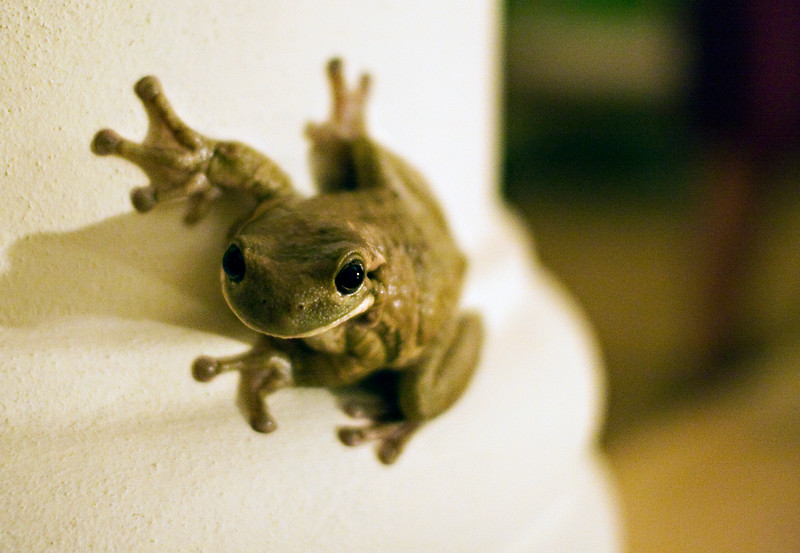 Frog in the lobby.