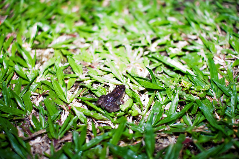 Tiny toad by the patio.