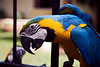 Macaw at the rest stop
