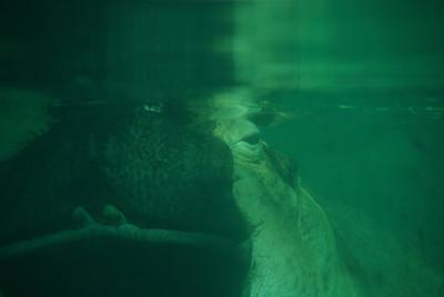 hello, Hippo!