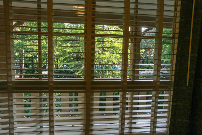 View from our Alligator Bayou room at the Port Orleans Riverside