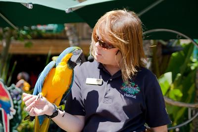 Rainforrest Cafe's Parrot